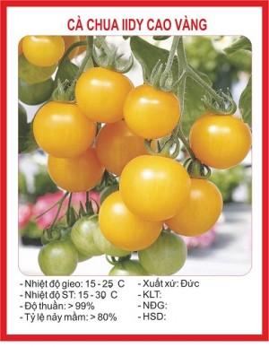 cà chua bi IIDY cao vàng