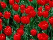 đỏ cờ